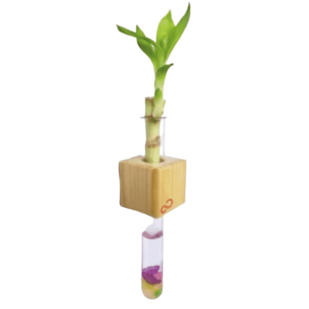 Stick - It Bamboo Fridge Magnet Greenopia